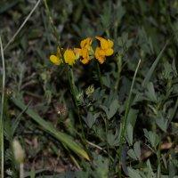 Цветок :: Александр Листопад
