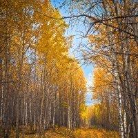 Одно слово - осень....... :: Андрей Ярославцев