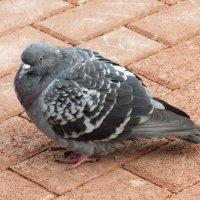 Птичка :: Камилла Галиева