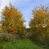 Трепещут на ветру осины листья :: Нина северянка