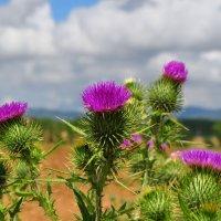 Цветочки в поле... :: Natalia Horborukova