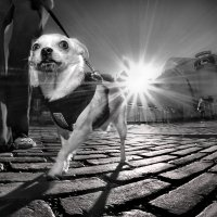 Sunny Star on promenade... :: Roman Mordashev