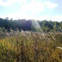 в поле :: Юлия Sun