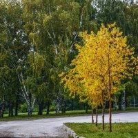 В парке :: Аркадий Медников