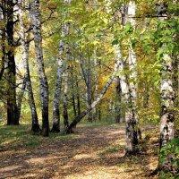 Осень :: Елена Аксамит