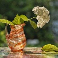 Живая красота не долговечна… :: Ирина Данилова