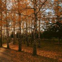Золотая осень :: Nikita Lev