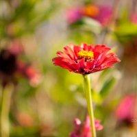 Цветок :: Сергей Горбенко