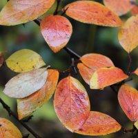 Моя любимая осень :: Анна Воложденинова