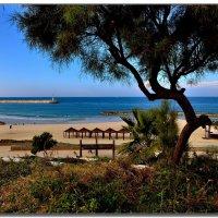 Пляж Ашкелона :: Leonid Korenfeld