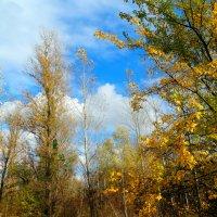 Осенняя мелодия... :: Тамара (st.tamara)