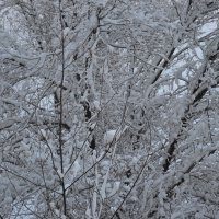 Откройте окна,господа...зима... :: Георгиевич