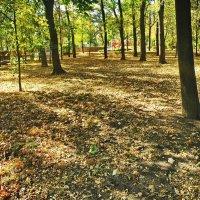 Осень в парке городском :: Валерий Тарасов