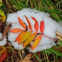 На первом снегу :: Татьяна Соловьева