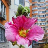 Им время цвесть вплоть до ноября :: Андрей Лукьянов