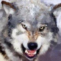 Волк :: Светлана Кузнецова