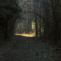 Лес в ноябре. :: веселов михаил