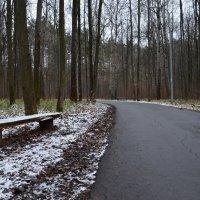 Ноябрь в лесу . :: Алексей