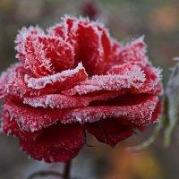 Первый мороз :: Татьяна
