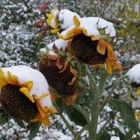 В снежных шапках... :: Тамара Бедай
