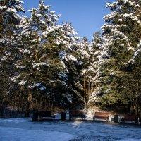 Снег и солнце :: Андрей К