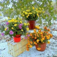 Ноябрь уходит... но так красиво ... со всеми красками и горделиво ... :: TAMARA111777