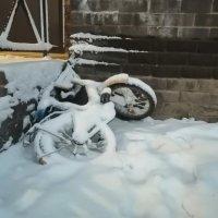 Лето под снегом :: Евгений Верзилин