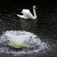 Лебедь городского сада. :: Милешкин Владимир Алексеевич