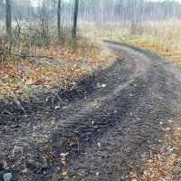 Все дороги и тропинки ведут в лес :: Raduzka (Надежда Веркина)