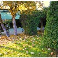 Под сенью золотой листвы :: Людмила