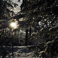 Зима, которой нет :: AleksSPb Лесниченко