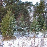 В Сибирь  пришла зима :: Татьяна Аистова