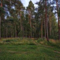 Не дремучий лес :: Serge Riazanov