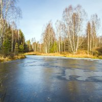 Замерзший пруд :: Елена Чудиновских
