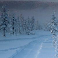 Морозный февраль Арктики :: Александр Велигура