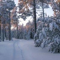 Под ногами снег скрипучий, на тропинке след лисы... :: Татьяна .