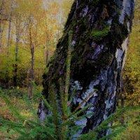 В лесу :: IREN jonina