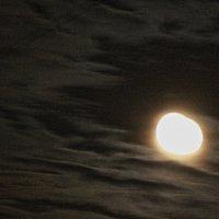 От великой музыки Бетховена  мне досталась вечная  Луна :: олег свирский