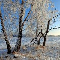 Декабрьское утро :: Геннадий Ячменев