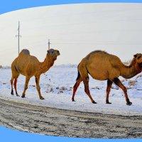 И в пустыне зима бывает.... :: Юрий Владимирович