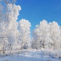 зимний денек :: Николай Мальцев