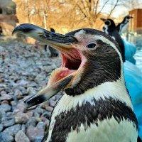Сегодня. Белградский зоопарк. :: Евгений Яхим