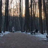 Зимний вечер в Нескучном саду :: Михаил Танин