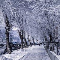 Зима :: Елена Берсенёва