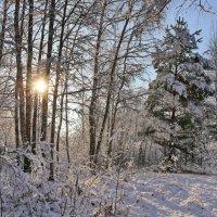 Зимнее солнце :: галина северинова