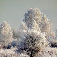 Цвет настроения-белый. :: nadyasilyuk Вознюк