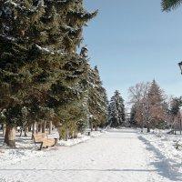 Прогулки по декабрьскому парку.. :: Андрей Заломленков