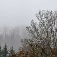 Лес и туман в декабре :: Heinz Thorns