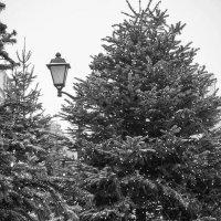 Снег кружится, летает, летает ... :: Лариса Корж