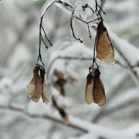 Остались зимовать... :: Марина Белоусова